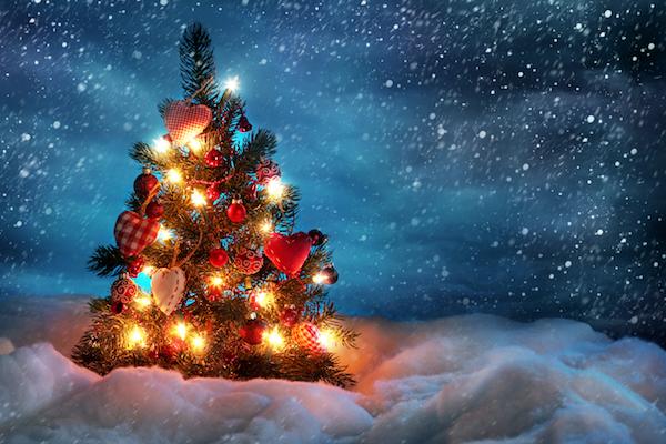 image fêtes de fin d'année vegan sur plantastique.com