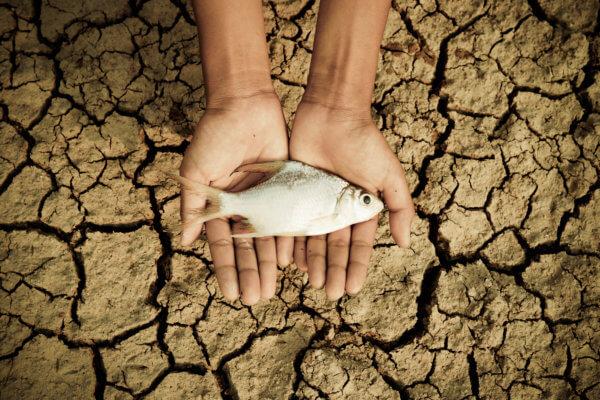poisson surpêche sécheresse